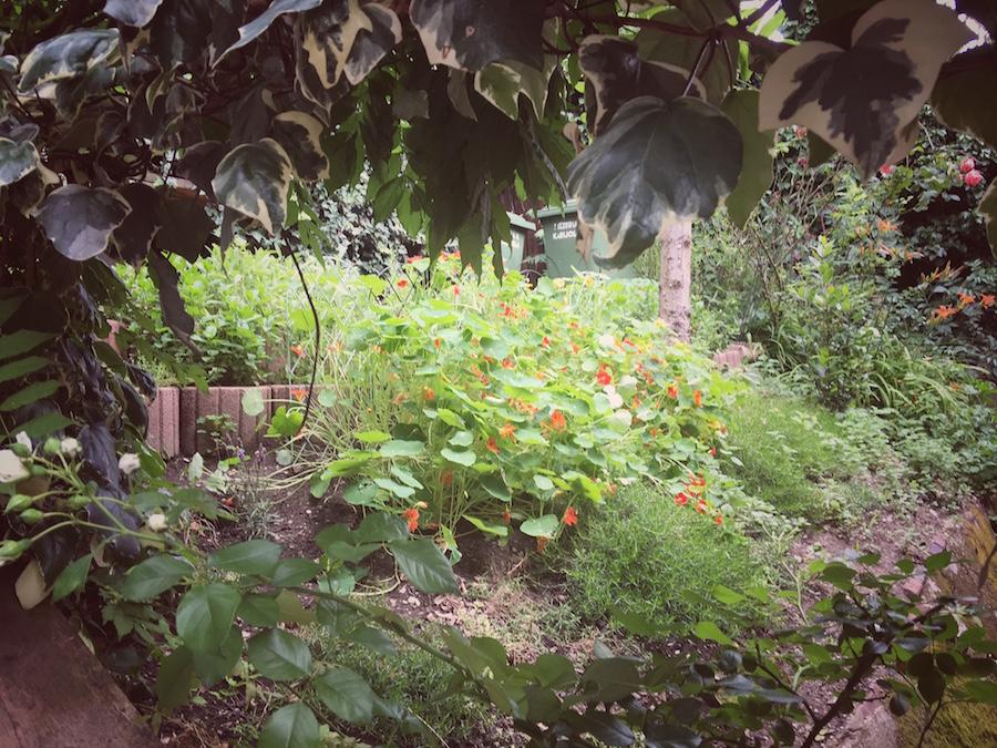 mali-bar-vrt