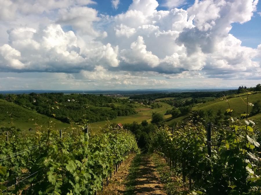 sember-vinogradi
