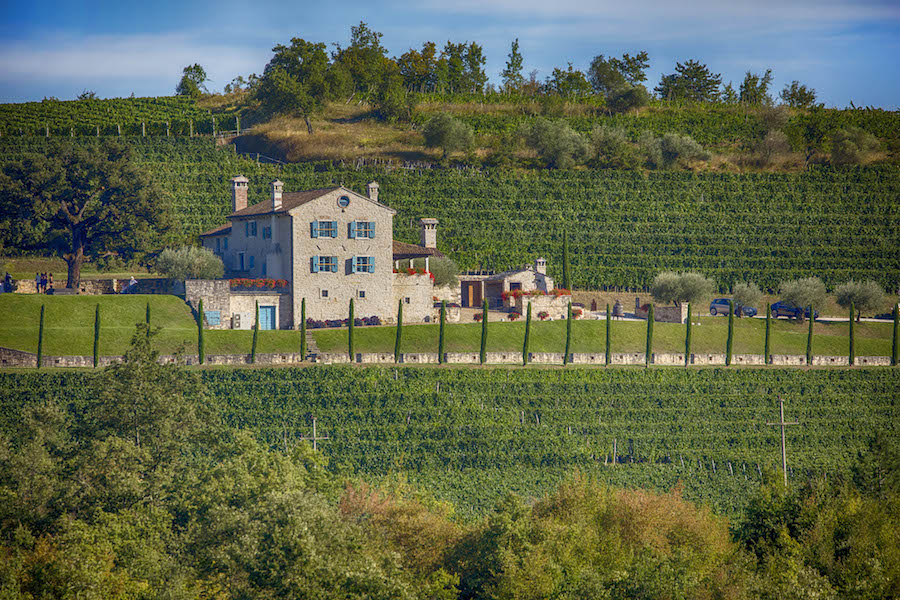 kabola-vinogradi