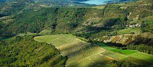 grimalda-vinograd