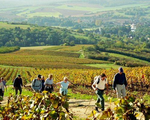 vinogradi-setaci