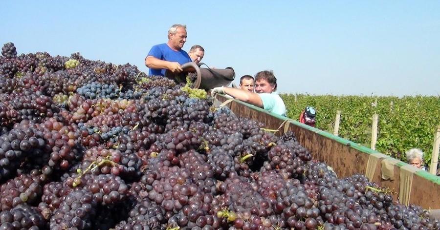 vinogradi-radnici