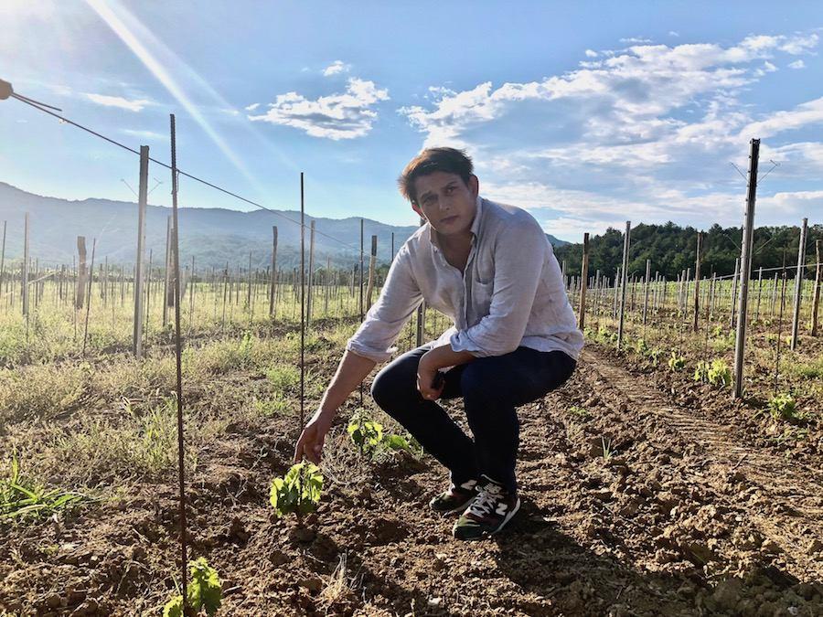 belaj-zan-vinogradi-novi