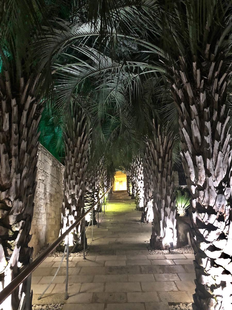 lemongarden-palme