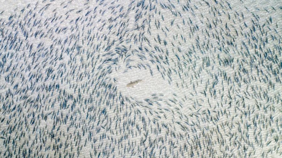 dron-morski-psi