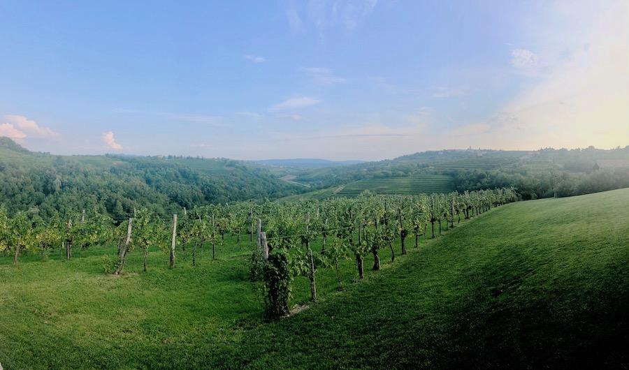 medot-vinogradi