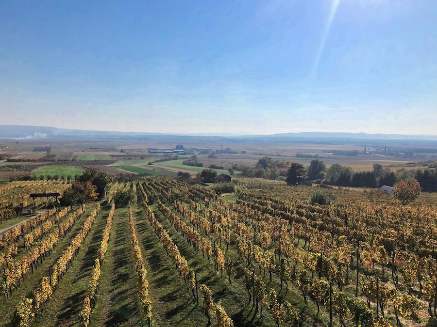 mihalj-vinogradi-kutjevo
