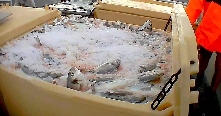 riba-uzgajalista