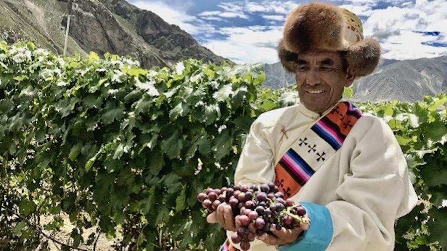 tibet-guinness-vinograd (1)