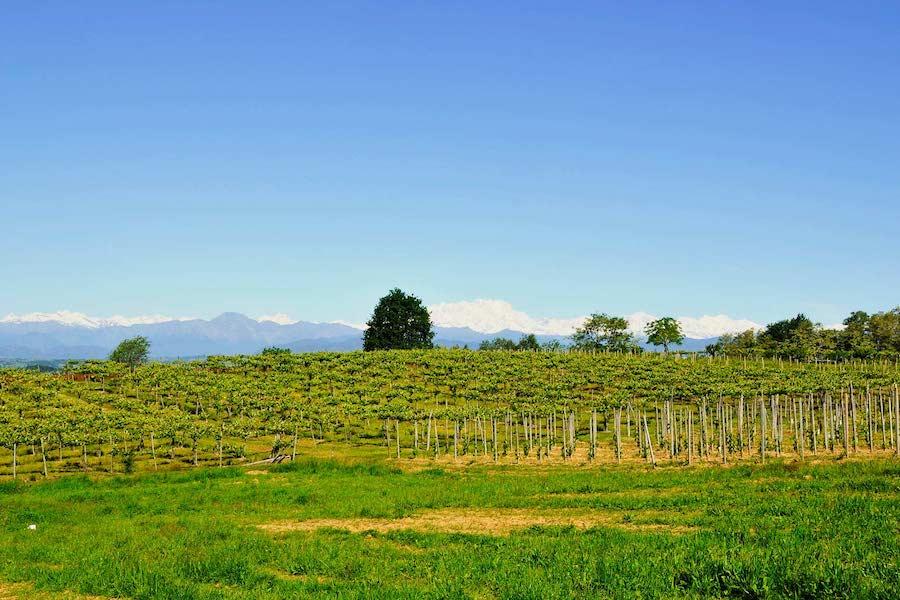 brigatti-vinogradi