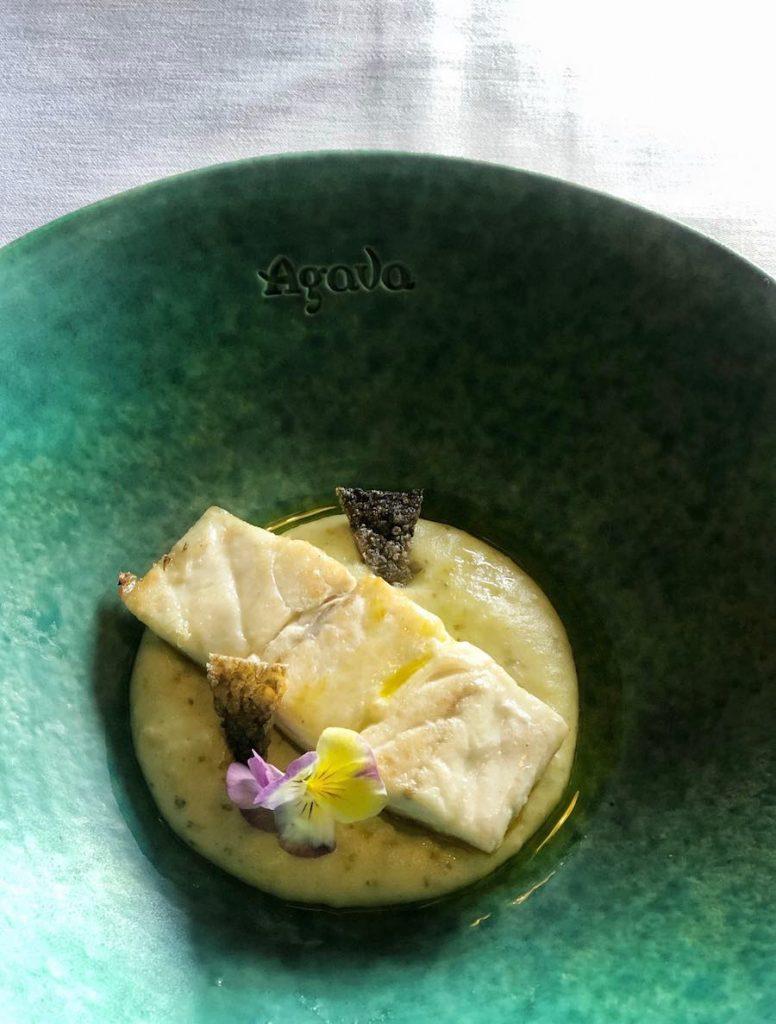 agava-brancin