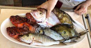 rivica-riba