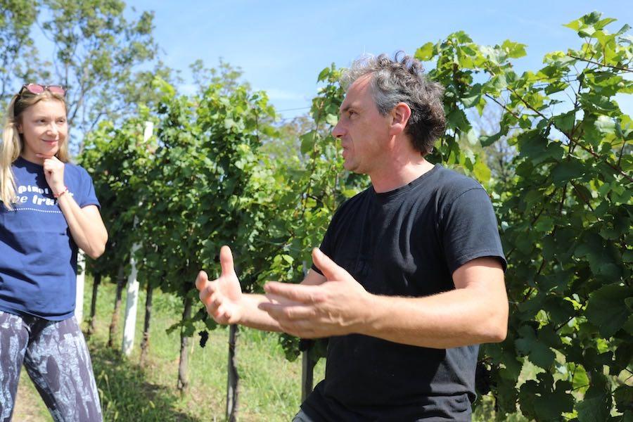 tomac-vinograd-martina