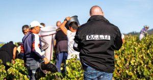 trafficking-vinogradi-francuska