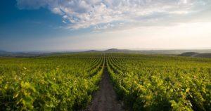 korlat-vinograd