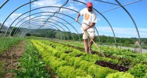 organska-poljoprivreda