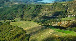 grimalda-vinograd-1