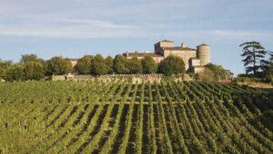 bordeaux-vinogradi