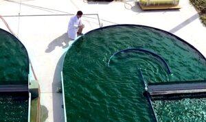 farme-algi