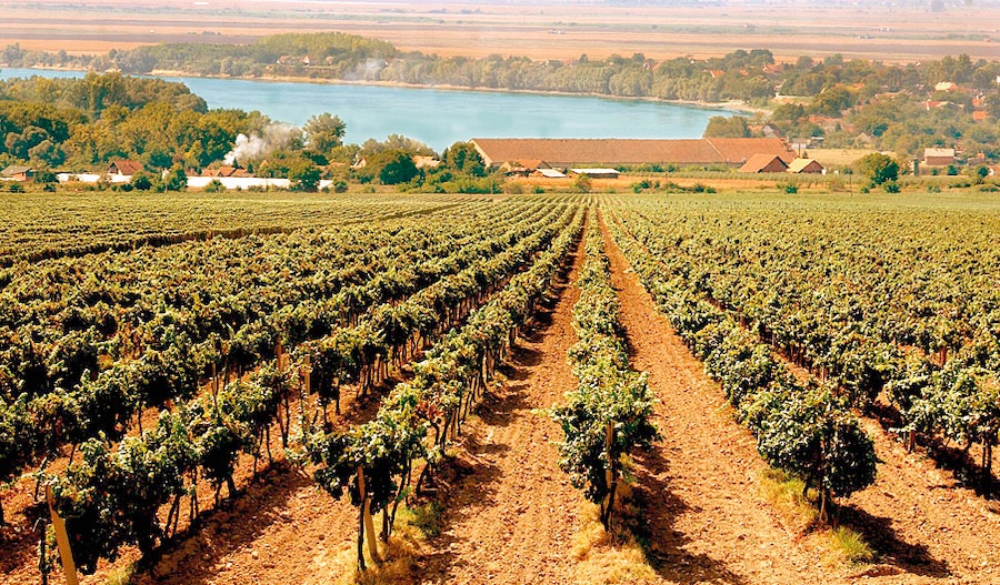 erdutski-vinogradi
