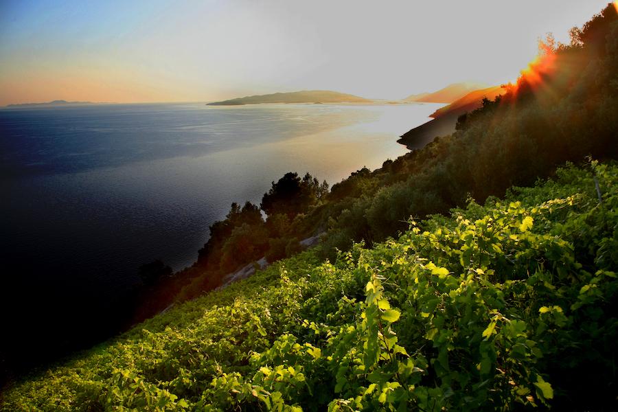 adria-vinogradi-dingac